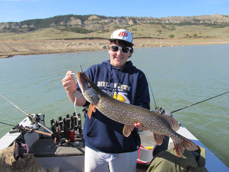 Fork peck guide fishing in 2013 photo 60 fort peck for Fort peck fishing report